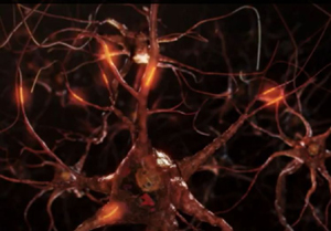 biosite